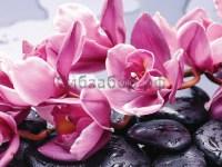 Бамбук-камень-орхидея